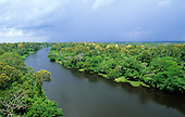 Amazonas State, Brazil. High view of a tributary of the Rio Negro with flowering trees and floating river plants.