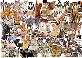 Kim, ANIMALS, REALISTISCHE TIERE, ANIMALES REALISTICOS, fondless, photos,+Cat Montage jigsaw.,cat, montage, jigsaw, birds, animals, cats, pets, dogs, bicolour, ginger, tabby, fluffy, shorthair, black+, tortoiseshell, tortie, kittens, cute, adorable, lovely, lovable, terriers, puppies, pups, rabbits, bunnies, owls, british,+white background++,GBJBWP13686,#a#, EVERYDAY ,puzzle