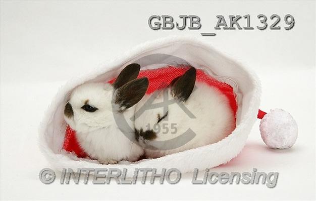 Kim, CHRISTMAS ANIMALS, photos, 2 rabbits, hat(GBJBAK1329,#XA#) stickers