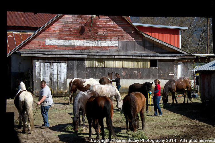 Vets and volunteers help out on Summer Raffo's farm in Oso, Washington providing her 16 horses with basic veterinary care, grooming and fresh hay.  Raffo, died in the Oso mudslide on March 22, 2014.