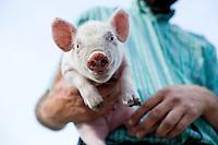 Grassroots Pork Company | Beulaville, NC