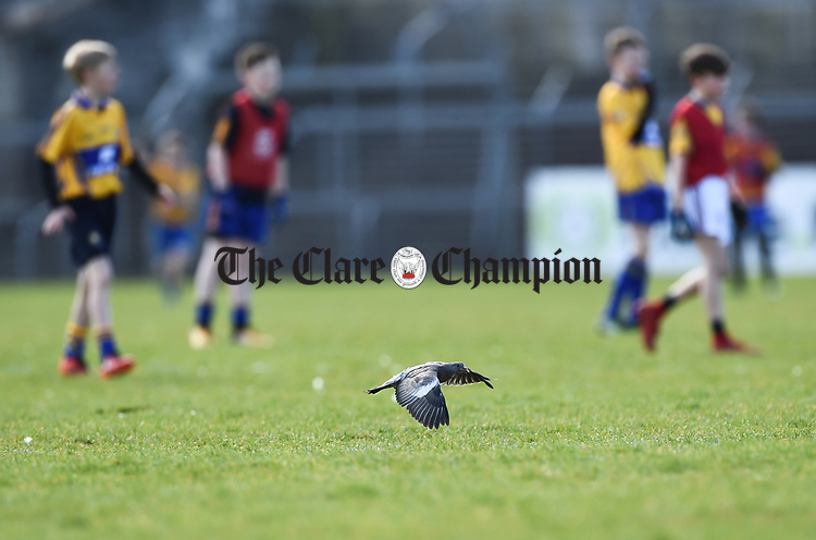 A stray pigeon landing on the playing field didn't deter young players in the half time game during the national League game in Cusack Park. Photograph by John Kelly.