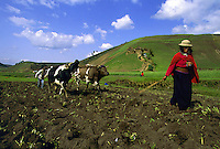 Indian woman laboring the land in Chimborazo province, in the moutains of Ecuador.