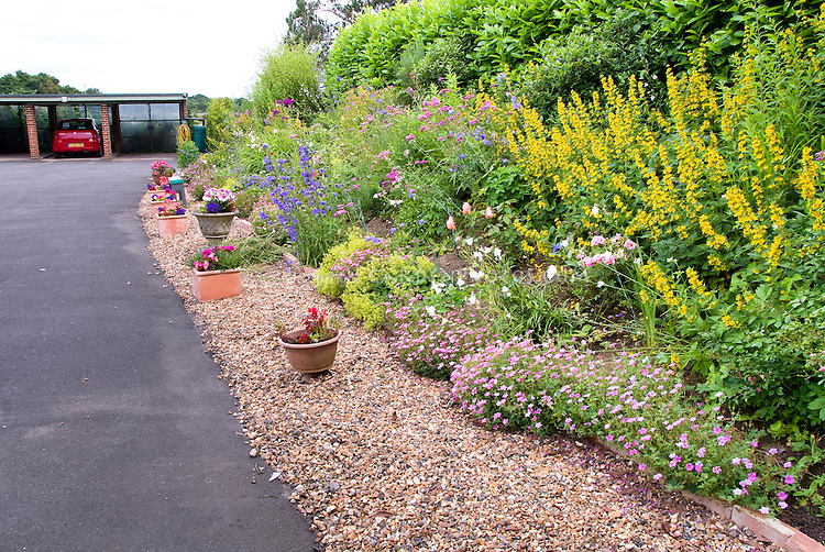 Rain garden: Allowing driveway water runoff to flower to Garden border next to it with Lysimachia, geranium, container pots, etc, with pebble edging and brick border