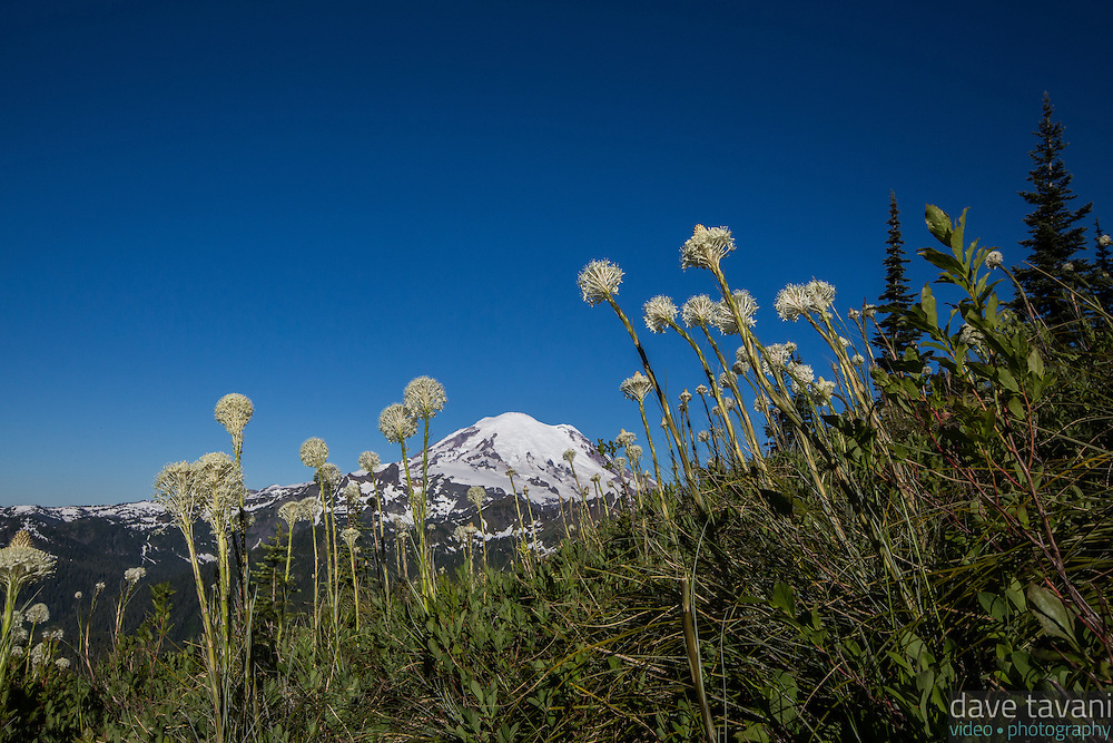 Mt. Rainier rises above the Bear Grass along the Naches Peak Loop Trail.