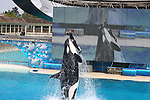 ORCA BREACHES WITH TRAINER