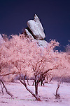 Granite Boulder and Mesquites, Texas Canyon, Arizona (Infrared)