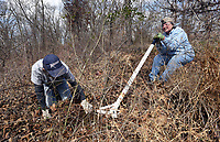 NWA Democrat-Gazette/FLIP PUTTHOFF<br /> ROOT OF THE MATTER<br /> Jane Foster (right) uses a tool Saturday March 3 2018 that pulls plants from the ground by their roots. Foster and Pat Dexter (left), both Northwest Arkansas Master Naturalists, helped remove invasive plants at the Illinois River Watershed Santruary in Cave Springs. Workers included area Master Naturalists, University of Arkansas students and Illinois River Watershed Partnership staff. The tract includes a small spring-fed lake, hiking trails and is part of Cave Springs Cave Natural Area. Foster's husband, Jim Foster, gave Foster the plant-pulling tool for her birthday.