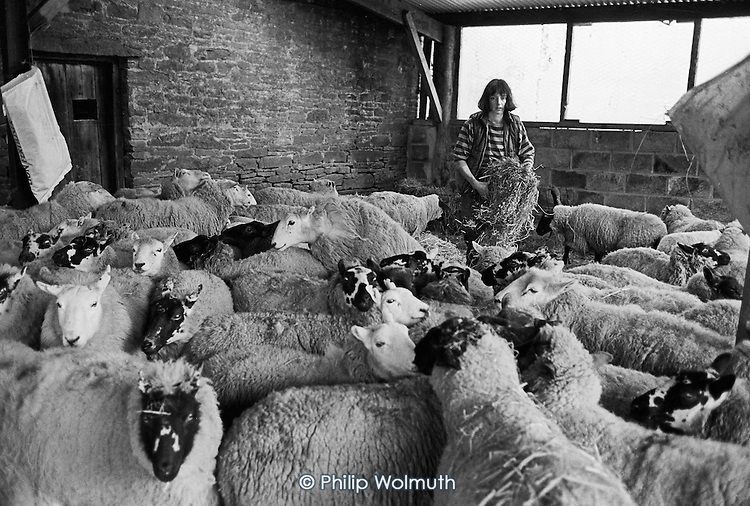 Juliet, Cwm Farm, 1988