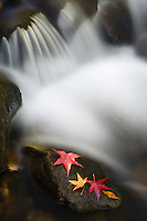 Red maple leaves decorate a small cascade on the Middle Saluda River