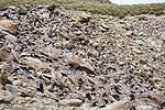 Southern Rockhopper Penguin Rookery