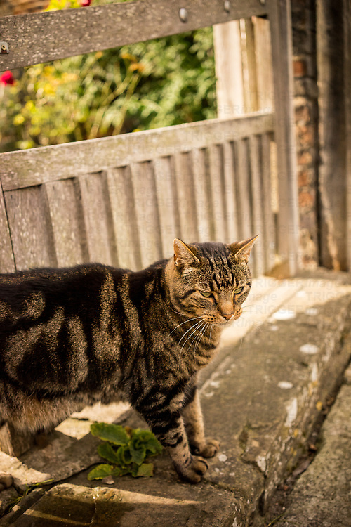 Tabby cat outdoors on a path in England