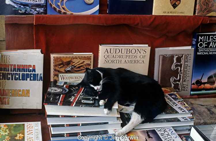 """Cat sleeping in bookstore display window along the """"AVE"""", in the U District Seattle Washington State USA"""