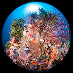 Misool, Raja Ampat, Indonesia; Fiabacet area, a colorful coral reef with red sea rods, green black sun corals and pink and orange soft corals fill the frame with the sun visible overhead