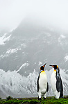 A pair of King Penguin (Aptenodytes patagonicus) stand before a mountain , Jason harbour, South Georgia