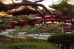 Jodo-shiki garden with a pond in front of Phoenix Hall, Hoodo, of Byodo-in in a beautiful sunrise scenery with pine tree branches in the foreground, Byodoin Buddhist temple in Uji, Kyoto Prefecture, Japan 2017