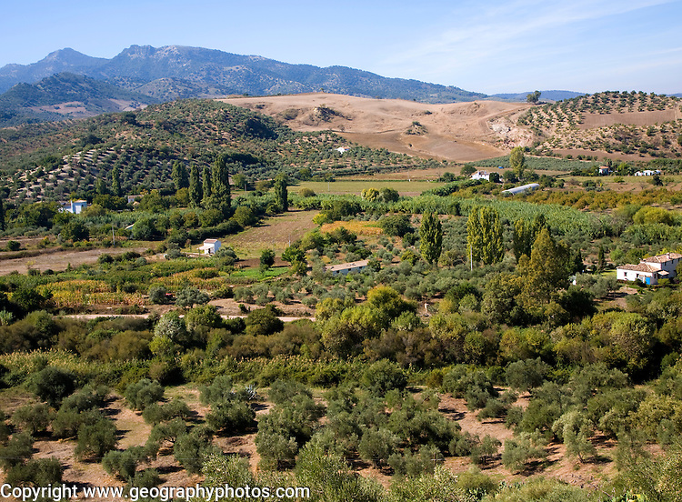 Fertile green valley farmland near Zahara de la Sierra, Cadiz province, Spain