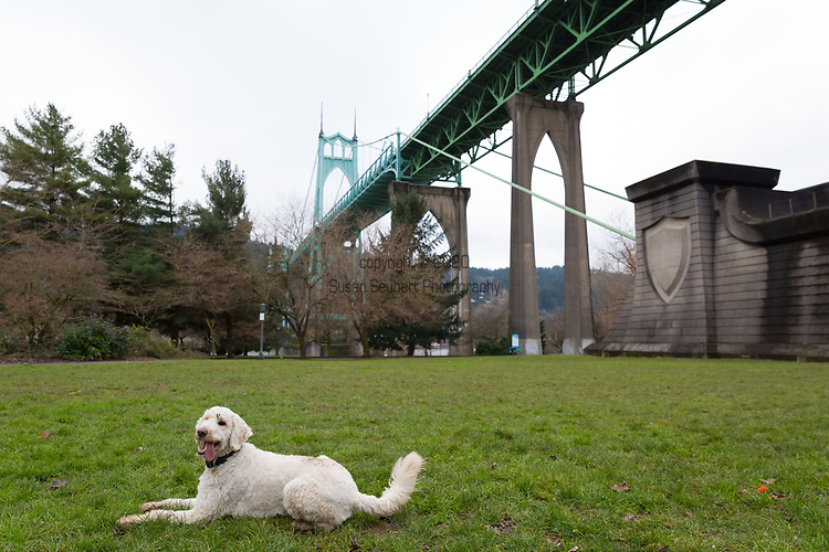 Cathedral Park under the St. Johns Bridge in Portland, Oregon