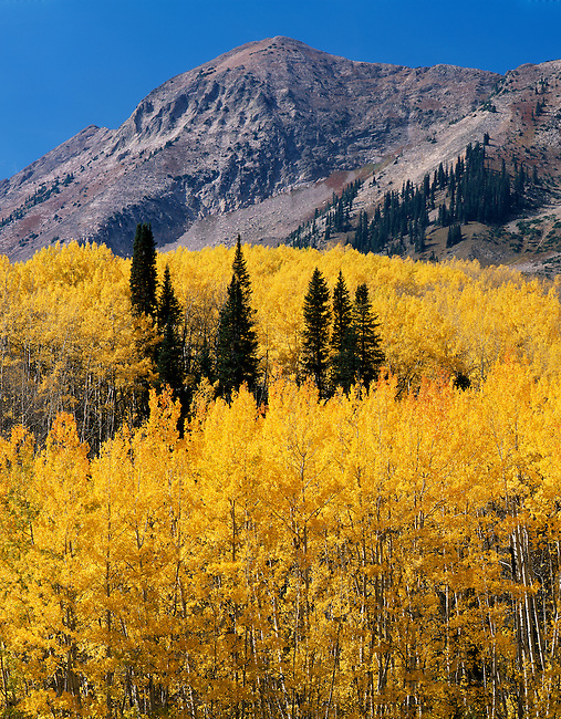Ohio Peak; Antrhacite Range; aspen in fall color; Gunnison National Forest, Colorado