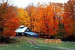 Autumn, fall colour, maple trees, Lanark County, Ontario