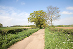 Spring seasonal landscape of quiet country lane and trees, Rendlesham, Suffolk, England