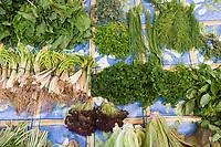 Afrique/Afrique du Nord/Maroc/Rabat: le marché central - détail étal d'herbes