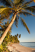 Itaparica Island, Bahia State, Brazil. Cacha Pregos. Palm trees along the beach. Cover shot.