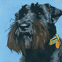 Portrait of Scottish Terrier dog ExclusiveImage