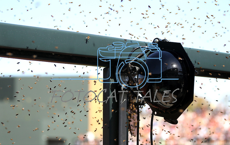 Thousands of bees swarming around the infield caused a 45-minute delay of a Cactus League preseason game between the San Francisco Giants and the Arizona Diamondbacks in Scottsdale, Ariz., on Sunday, March 4, 2012. The Giants won 11-1..Photo by Cathleen Allison
