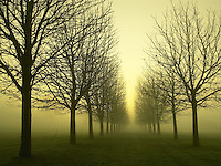 An avenue of bare winter trees disppears into the evening mist at Cole Park