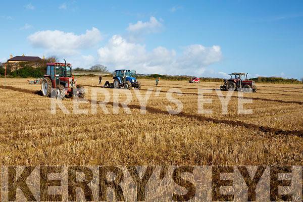 Ballyheigue ploughing