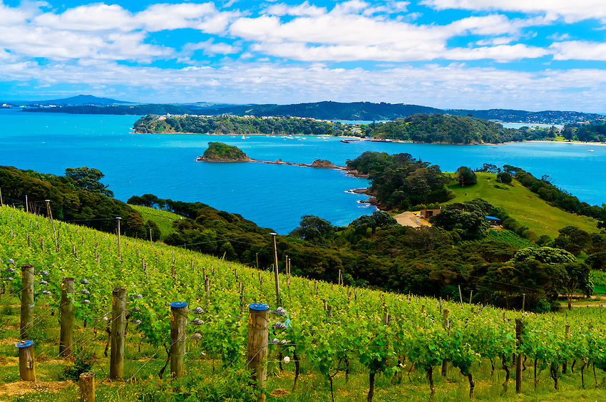 Best Wineries In New Zealand North Island