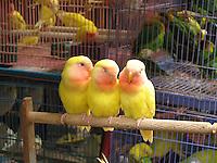 Sweet Tweets, Hong Kong Bird Market