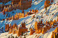 Early morning winter sun highlights hoodoos in Bryce Canyon National Park, Utah. Hoodoos are pinnacles or odd-shaped rocks left standing by the forces of erosion. Technically not a canyon, most of the erosion at Bryce comes from the freezing and thawing of water, a frequent occurence due to its high elevation of approximately 7,000 to 9,000 feet (2,133 - 2,743 m). In addition to ice, wind and water erosion also play a role.