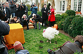 Members of the media gather around a turkey before United States President George W. Bush pardons the turkey named Pumpkin during the annual White House Turkey Presidential Pardon presentation in the Rose Garden at the White House November 26, 2008 in Washington, DC. Later today Pumpkin will be flown to Disneyland and be an honorary grand marshal of Disney's Thanksgiving Day Parade in California.  The annual White House tradition that has held strong since President Harry S. Truman first pardoned a bird in 1947.  <br /> Credit: Mark Wilson / Pool via CNP