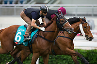 SHA TIN,HONG KONG-MAY 04: Rapper Dragon, trained by John Moore, the first Hong Kong triple crown horse in history,ridden by Joao Moreira,prepares for the Champions Mile before Barrier Draw at Sha Tin Racecourse on May 4,2017 in Sha Tin,New Territories,Hong Kong (Photo by Kaz Ishida/Eclipse Sportswire/Getty Images)