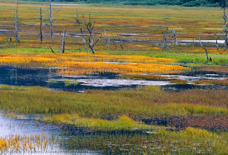 Autumn colors highlight the vegetation of the wetlands near near Portage, Alaska.