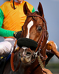 ARCADIA, CA - FEBRUARY 10: Om with Flavien Prat at the Thunder Road Stakes at Santa Anita Park on February 10, 2018 in Arcadia, California. (Photo by Chris Crestik/Eclipse Sportswire/Getty Images)