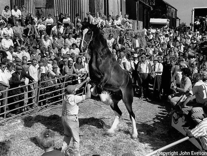 Shire horse sale, Staffordshire.