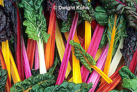 HS80-007z  Bright Lights Swiss Chard or Multicolor Chard