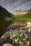 A spring bouquet of Aspen Daisies decorates the Maroon Lake shoreline with Maroon Bells reflected in the lake. Rocky Mountains, Colorado, USA.