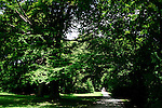 View of englischergarten or english garden in Munich, Germany, July 31, 2008. (ALTERPHOTOS/Alvaro Hernandez)