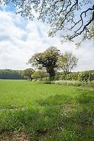 Cross compliance field margin in spring barley field - Norfolk, May