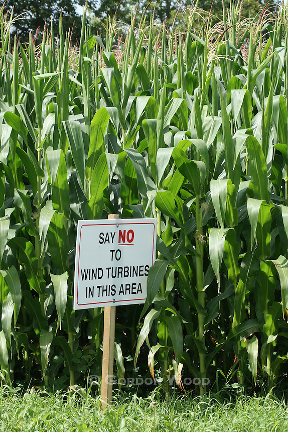 """Say No to Wind Turbines in this Area"" Sign next to Southwestern Ontario Corn Field"