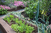 Raised bed organic garden with vegetables and herbs, peppers, onions, basil, parsley