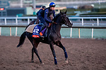 October 30, 2019: Breeders' Cup Filly & Mare Turf entrant Villa Marina, trained by Carlos Laffon-Parias, exercises in preparation for the Breeders' Cup World Championships at Santa Anita Park in Arcadia, California on October 30, 2019. Michael McInally/Eclipse Sportswire/Breeders' Cup/CSM