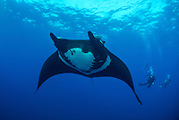Giant Manta, Manta birostris and divers, San Benidicto, Revillagigedo Islands, Mexico, Pacific Ocean