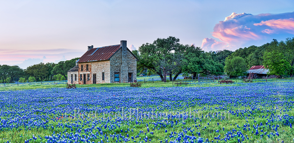 Another capture of this iconic site as a smaller panorama of the bluebonnet farm house out in the texas hill country just at sunset with a hugh storm clouds. The storm cloud picked up the colors of the sunset in this landscape image. This field of  bluebonnet still has the old rusting farm equipment in front of this old stone farm house as they were left many years ago when it was last farmed.  I am no specialist on farm equipment but these look like they would of been pulled by a mule or pushed by human power.  This is farm house is a favorite of people on the hunt for wildflowers many who come from all around who want to capture the photo.  Among the field of bluebonnets were also a sprinkling of Indian Paintbrush for a pop of red.  This place over the years has turned into a tourist destination for wildflowers photos. However ominus signs are cropping up since the property next door is now being developed and this property is also for sale.