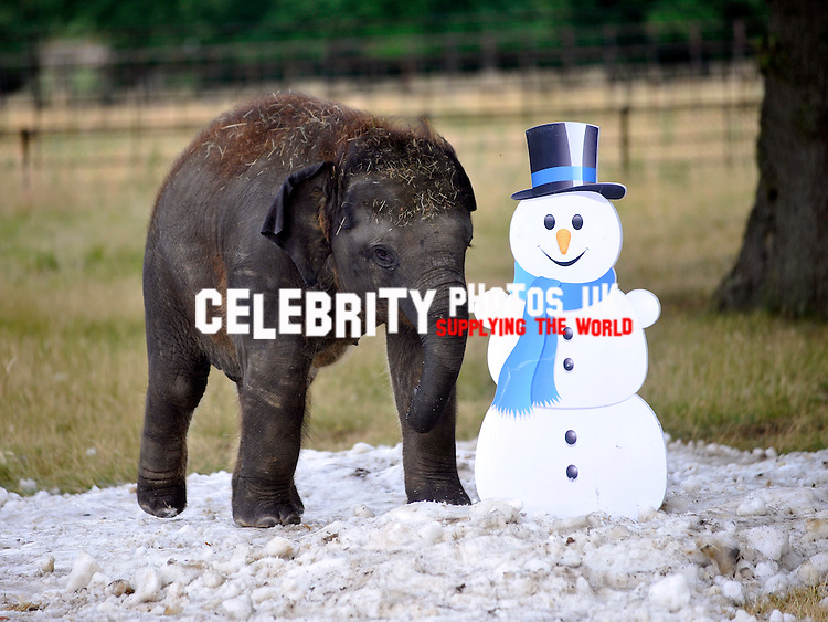 As the summer scorcher continues to sweep the country, ZSL Whipsnade Zoo&rsquo;s elephants are set to beat the heat with a jumbo delivery &ndash; of 20 tonnes of snow.<br /> <br />  <br /> <br /> The herd&rsquo;s play paddock will be coated in a thick blanket of snow as it&rsquo;s transformed into a winter wonderland - complete with snowmen - for them to play with.<br /> <br />  <br /> <br /> The extra special snowfall comes from The Snow Centre in Hemel Hempstead as part of its Beat the Heat summer campaign, and will see their technicians getting up at 5am to prepare for the Zoo&rsquo;s very unseasonal delivery.<br /> <br />  <br /> <br /> Not only will the snow help to keep the elephants cool, it&rsquo;s also the perfect summer enrichment; sparking their curiosity and playful natures as they roll in it and make snowballs with their trunks.<br /> <br />  <br /> <br /> Assistant curator of elephants, Lee Sambrook, said &ldquo;We&rsquo;re always looking for new ways to keep our elephants cool in this heat, and the youngsters especially love having new things to investigate so we&rsquo;re expecting them to love their snowy surprise.&rdquo;