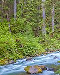 Olympic National Park, Washington<br /> Sol Duc river rapids flow through temperate rainforest <br /> near Sol Duc falls